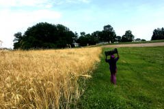 Walking with wheat